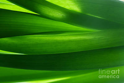 Card Photograph - Green Grass Background In Backlight by Michal Bednarek