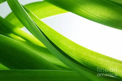 Leaf Photograph - Green Grass Background by Michal Bednarek