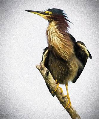 Photograph - Green Heron by Patty MacInnis