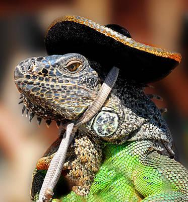 Iguana Photograph - Green Iguana by Craig Incardone