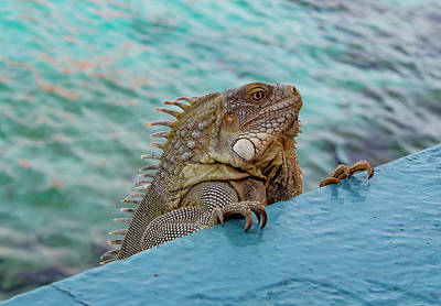 Green Iguana Looking Over Wall Print by Jean Noren
