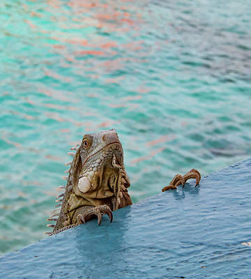 Green Iguana Peering Over Wall Print by Jean Noren