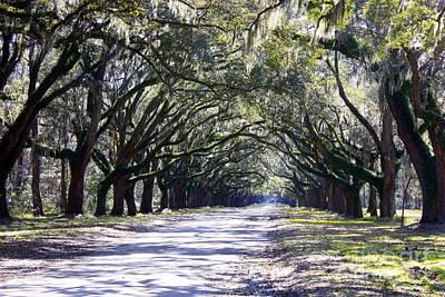 Savannah Nature Photograph - Green Lane by Carol Groenen