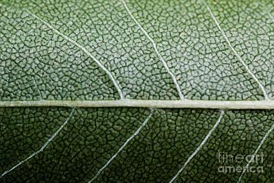 Green Leaf Geometry Print by Ryan Kelly