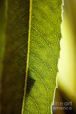 Green Leaf Lines Print by Ray Laskowitz - Printscapes