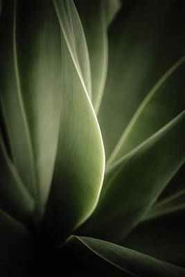Simple Beauty In Colors Photograph - Green Leaves Abstract by Marco Oliveira
