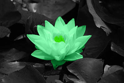 Flowers Photograph - Green Lily Blossom by Shane Bechler