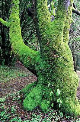 Jim Nelson Photograph - Green Man by Jim Nelson