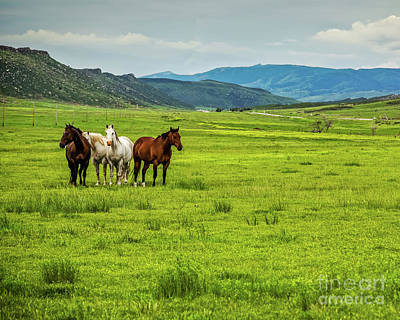 Green Pastures Print by Jon Burch Photography