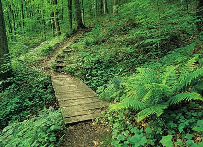 Jim Nelson Photograph - Green Path by Jim Nelson
