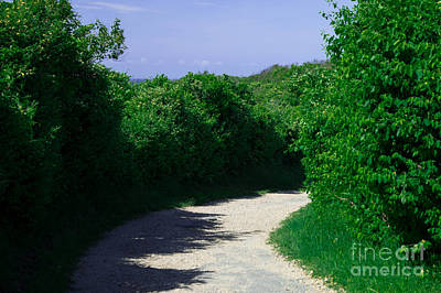 Montauk Photograph - Green Pathway by Chris Baboolal