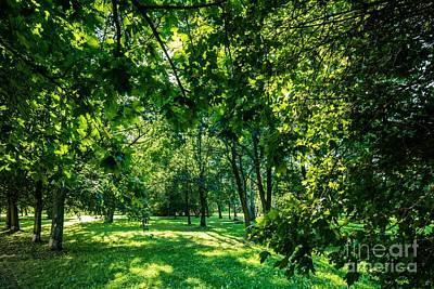 Leaf Photograph - Green Summer Park Vivid Landscape by Michal Bednarek