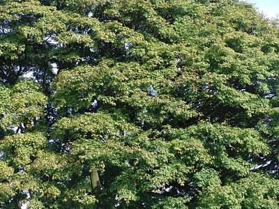 Photograph - Green Tree by Ashok Patel