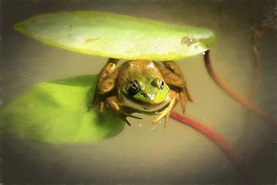 Bullfrogs Photograph - Green Umbrella by Donna Kennedy