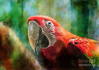 Macaw Digital Art - Green Winged Macaw by Lois Bryan
