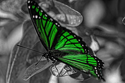 Butterfly Photograph - Green With Envy by Barry Jones