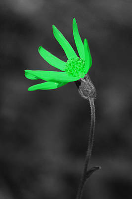 Flowers Photograph - Green9 by Shane Bechler