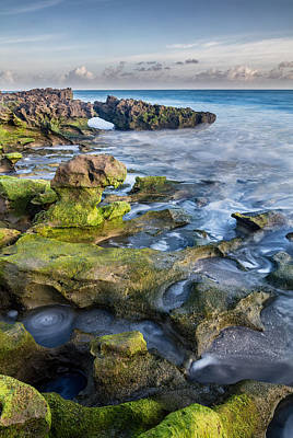 Dramatic Photograph - Greenery In Coral Cove by Andres Leon
