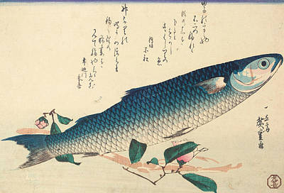Blue And Grey Drawing - Grey Mullet, Camellia And Udo by Hiroshige
