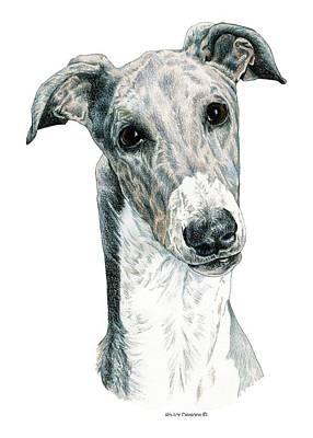 Dog Race Track Drawing - Greyhound by Kathleen Sepulveda
