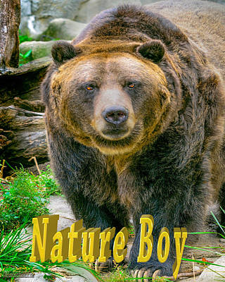 Boy Photograph - Grizzly Bear Nature Boy    by LeeAnn McLaneGoetz McLaneGoetzStudioLLCcom