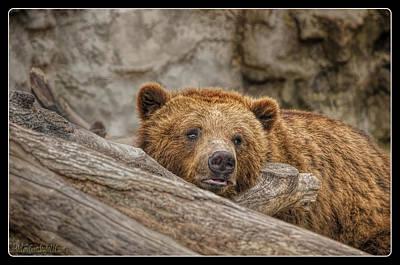 Food And Beverage Photograph - Grizzly Bear On Log  by LeeAnn McLaneGoetz McLaneGoetzStudioLLCcom