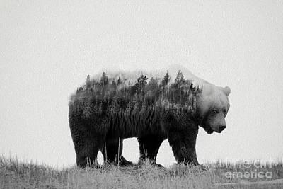 Grizzly Bear Wilderness Print by Wildlife Fine Art