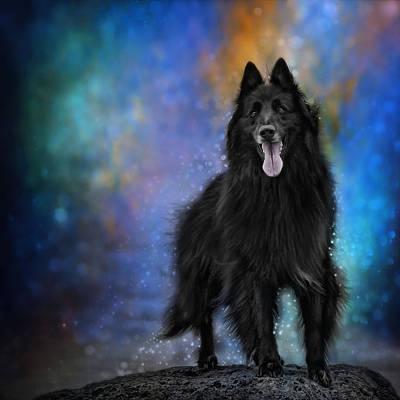 Belgian Sheepdog Photograph - Belgian Sheepdog Artwork 4 by Wolf Shadow  Photography