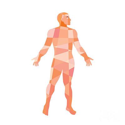 Gross Anatomy Male Isolated Low Polygon Print by Aloysius Patrimonio