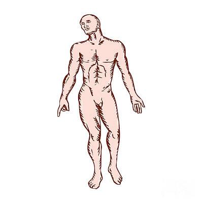 Gross Anatomy Male Standing Woodcut Print by Aloysius Patrimonio