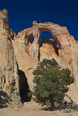 Escalante Photograph - Grosvenor Arch by Mike Dawson