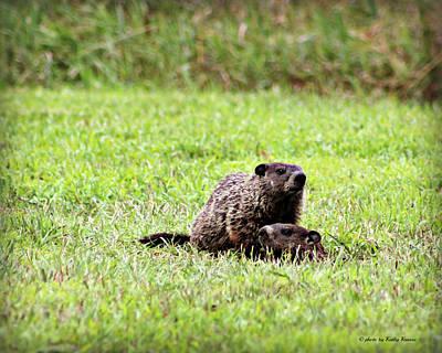 Groundhog Digital Art - Groundhog Alert by Kathy Krause