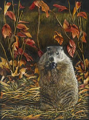 Groundhog Bulking Up For Winter Original by Susan Donley