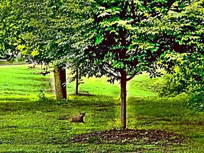Groundhog Digital Art - Groundhogs Day  by Rick Todaro