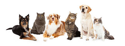 Group Of Cats And Dogs Print by Susan  Schmitz