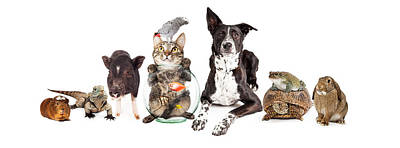 Group Of Domestic Pets Sitting Together Print by Susan Schmitz