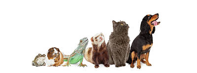 Group Of Pets Looking Up And Side Banner Print by Susan Schmitz