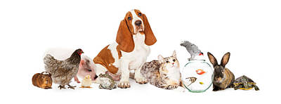 Group Of Pets Together Over White Print by Susan Schmitz