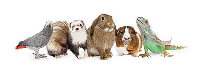 Group Of Small Domestic Pets Over White Print by Susan Schmitz