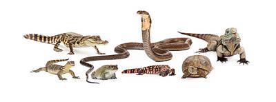Baby Turtle Photograph - Group Of Various Reptiles by Susan Schmitz