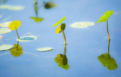 Florida Pond Photograph - Growing Together by Parker Cunningham