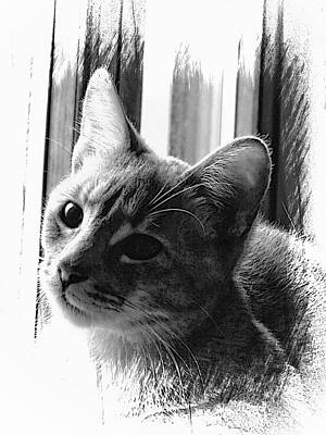 Gray Tabby Digital Art - Growing Up by Dorothy Berry-Lound