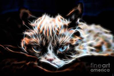 Grumpy Cat Print by Marvin Blaine
