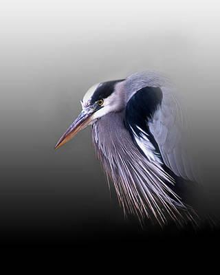 Of Birds Photograph - Grumpy Ole Man by Skip Willits