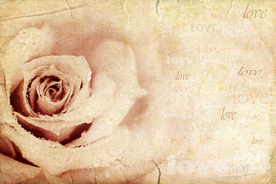 Grungy Rose Background Print by Anna Om