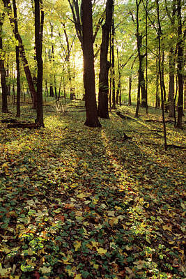 Fall Photograph - Grunow's Woods by Bruce Thompson