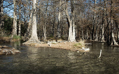 Cypress Stump Photograph - Guadalupe River In Winter by Karen Musick