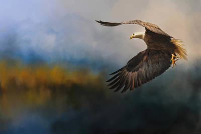 Eagle Painting - Guided By The Light by Jai Johnson
