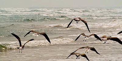 Gulf Gulls Print by Michael Flood