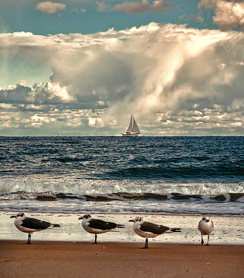 D700 Photograph - Gulls And Sails by Jim Moore